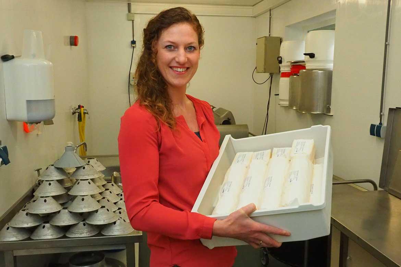 Nylander biologische kaas, boter en vlees van jersey koeien in Friesland
