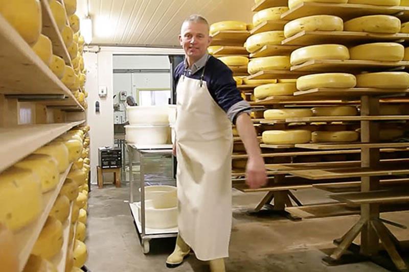 ylander biologische kaas, boter en vlees van jersey koeien in Friesland